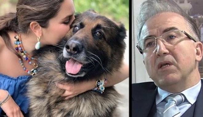 Nero adlı köpeği öldüren Berg Elektrik'in Genel Müdürü Alp Erkin'e şok!