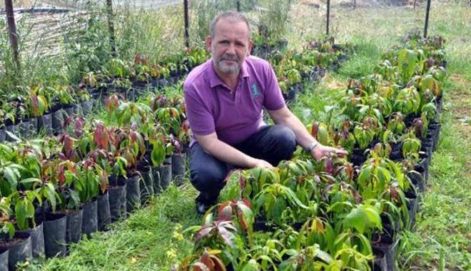 Otellere ve yazlıkçılara mango çağrısı
