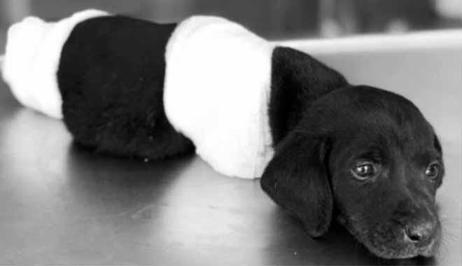 Bacaklarını kesilen yavru köpek olayında tutuklanan şüphelinin eşi: Gerçek cani saklanıyor