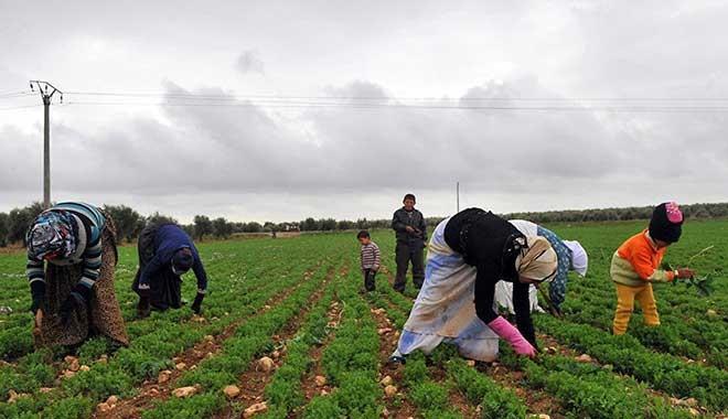 TÜİK: Tarımda üretim maliyeti yüzde 27 arttı
